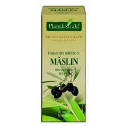 Extract din mladite de MASLIN PlantExtrakt