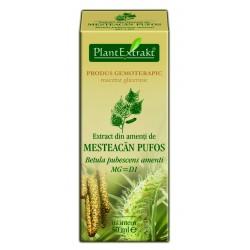 Extract din amenti de MESTEACAN PUFOS PlantExtrakt