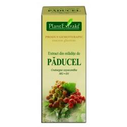 Extract din mladite de PADUCEL PlantExtrakt