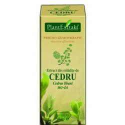 Extract din mladite de CEDRU PlantExtrakt