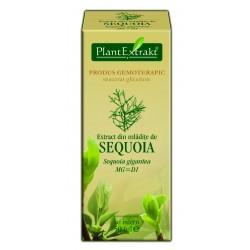 Extract din mlădiţe de SEQUOIA Plant Extrakt
