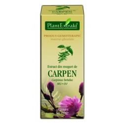 Extract din muguri de CARPEN PlantExtrakt